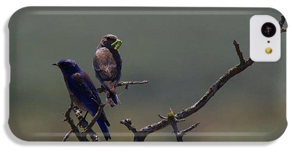 Mountain Bluebird Pair IPhone 5c Case by Mike  Dawson