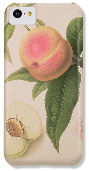Noblesse Peach IPhone 5c Case by William Hooker
