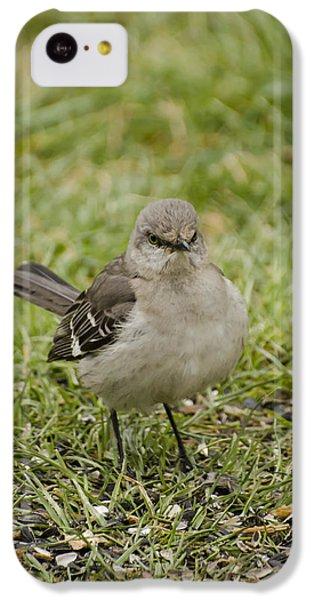 Northern Mockingbird IPhone 5c Case by Heather Applegate