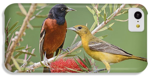 Orchard Oriole Pair IPhone 5c Case by Bonnie Barry