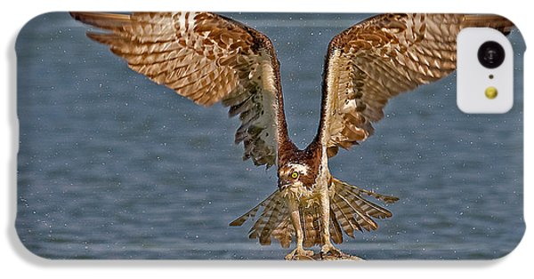 Osprey Morning Catch IPhone 5c Case by Susan Candelario