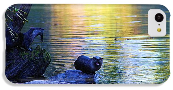 Otter Family IPhone 5c Case by Dan Sproul