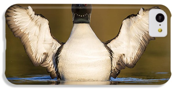Pacific Loon Wing Flap IPhone 5c Case by Tim Grams