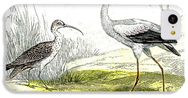 Painted Storks IPhone 5c Case by Collection Abecasis