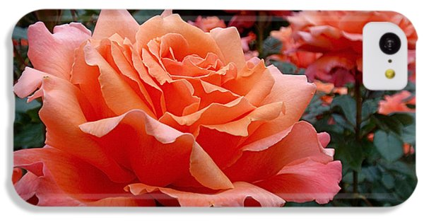 Peach Roses IPhone 5c Case by Rona Black