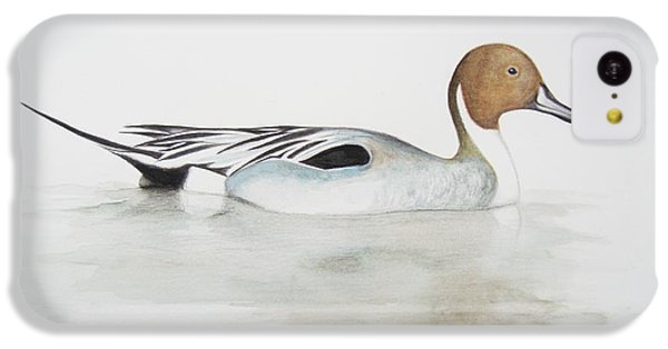 Pintail Duck IPhone 5c Case by Ele Grafton