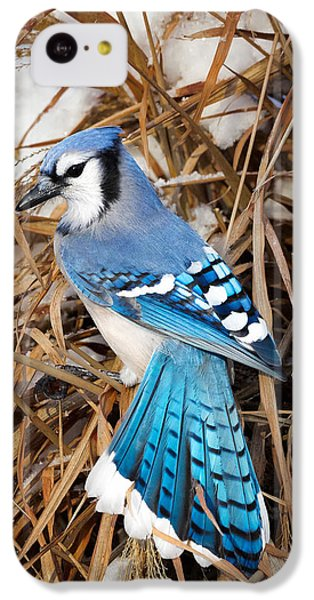 Portrait Of A Blue Jay IPhone 5c Case by Bill Wakeley