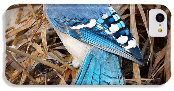 Portrait Of A Blue Jay Square IPhone 5c Case by Bill Wakeley
