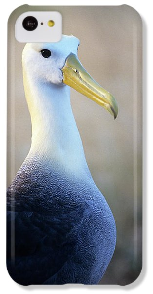 Portrait Of A Waved Albatross IPhone 5c Case by Thomas Wiewandt