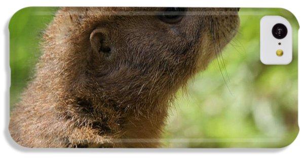 Prairie Dog Portrait IPhone 5c Case by Dan Sproul