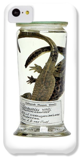 Preserved Newts IPhone 5c Case by Gregory Davies