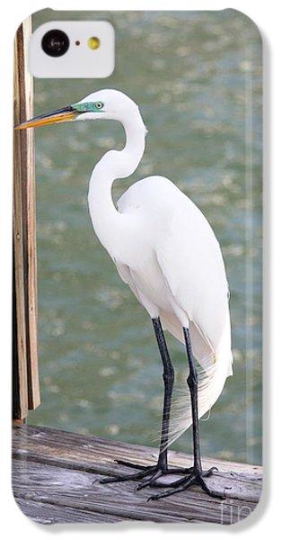 Pretty Great Egret IPhone 5c Case by Carol Groenen