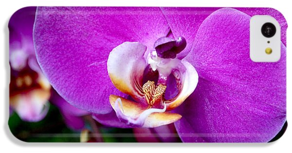 Purple Orchid IPhone 5c Case by Rona Black