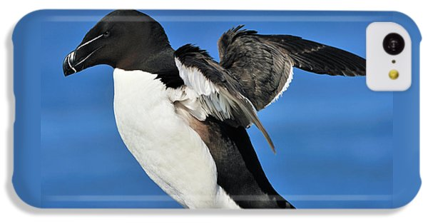 Razorbill IPhone 5c Case by Tony Beck