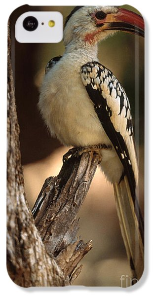 Red-billed Hornbill IPhone 5c Case by Art Wolfe