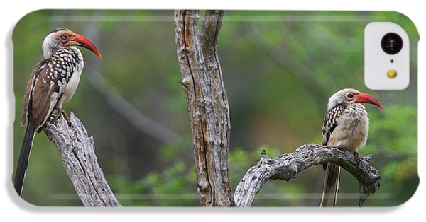 Red-billed Hornbills IPhone 5c Case by Bruce J Robinson