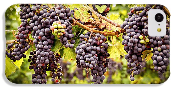 Red Grapes In Vineyard IPhone 5c Case by Elena Elisseeva