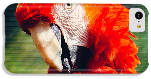 Red Macaw Closeup IPhone 5c Case by Pati Photography