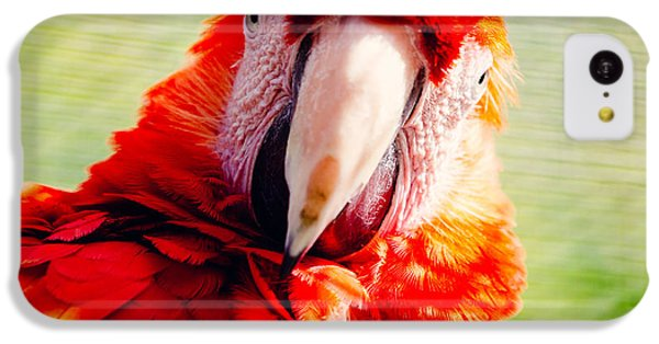 Red Macaw IPhone 5c Case by Pati Photography