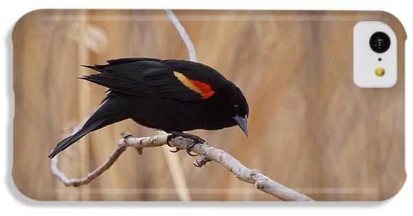 Red Winged Blackbird 1 IPhone 5c Case by Ernie Echols