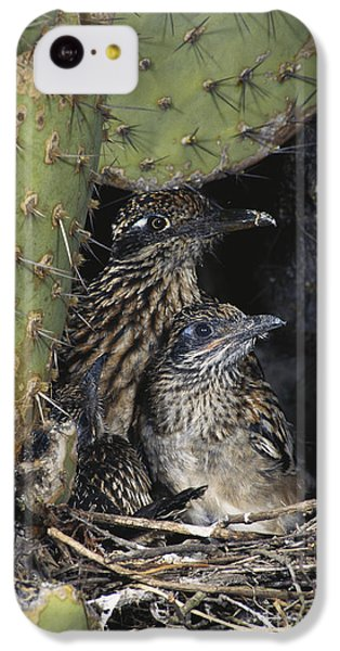 Roadrunners In Nest IPhone 5c Case by Anthony Mercieca
