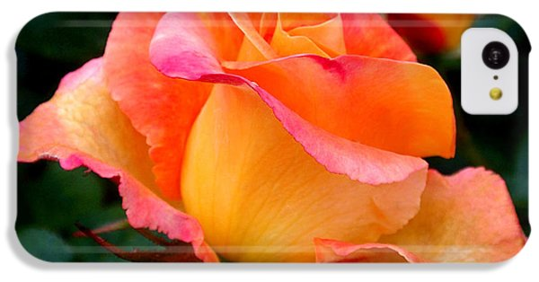 Rose Beauty IPhone 5c Case by Rona Black
