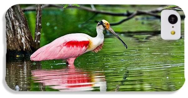 Roseate Spoonbill Wading IPhone 5c Case by Anthony Mercieca