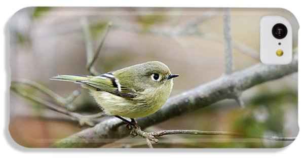 Ruby-crowned Kinglet IPhone 5c Case by Christina Rollo