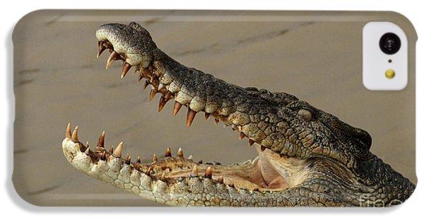 Salt Water Crocodile 1 IPhone 5c Case by Bob Christopher