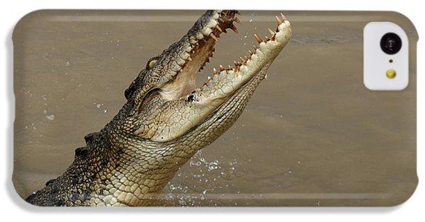 Salt Water Crocodile Australia IPhone 5c Case by Bob Christopher