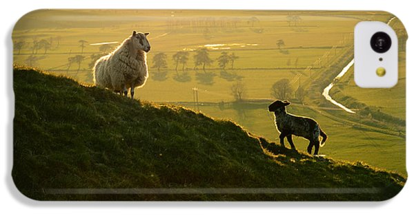 Scottish Sheep And Lamb IPhone 5c Case by Mr Doomits