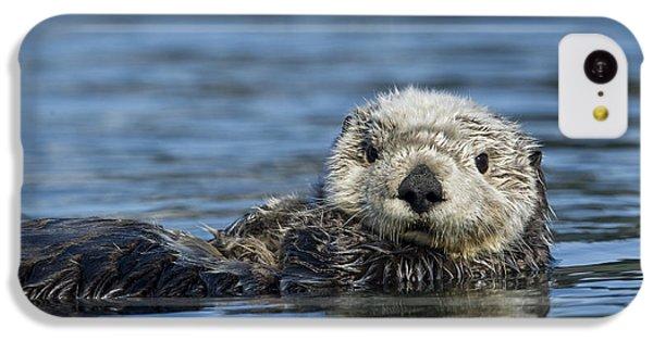 Sea Otter Alaska IPhone 5c Case by Michael Quinton