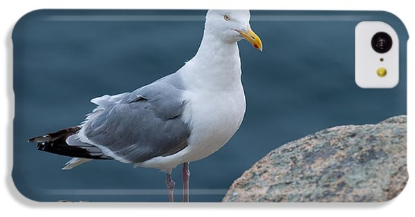 Seagull IPhone 5c Case by Sebastian Musial