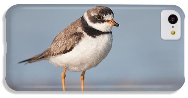 Semipalmated Plover IPhone 5c Case by Clarence Holmes