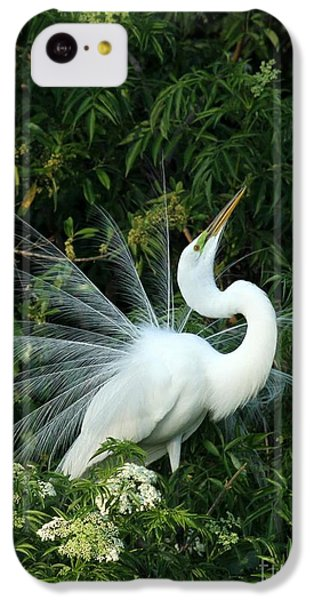 Showy Great White Egret IPhone 5c Case by Sabrina L Ryan