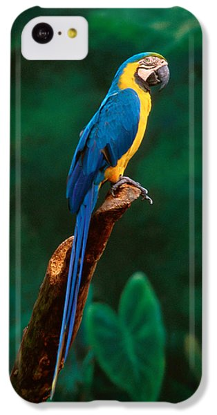 Singapore Macaw At Jurong Bird Park  IPhone 5c Case by Anonymous