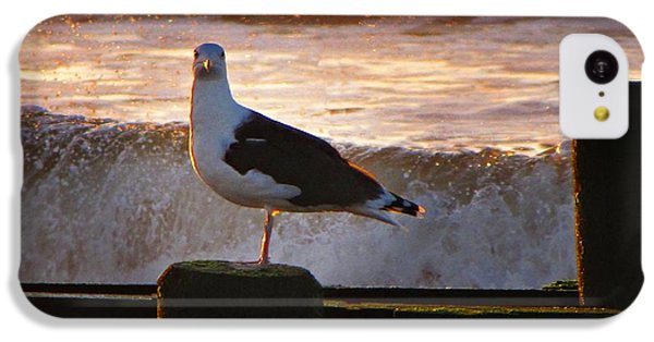 Sittin On The Dock Of The Bay IPhone 5c Case by David Dehner