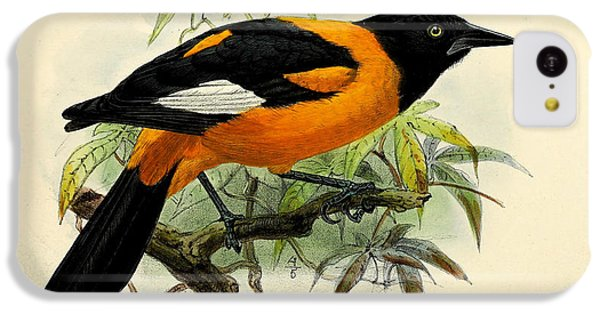 Small Oriole IPhone 5c Case by J G Keulemans