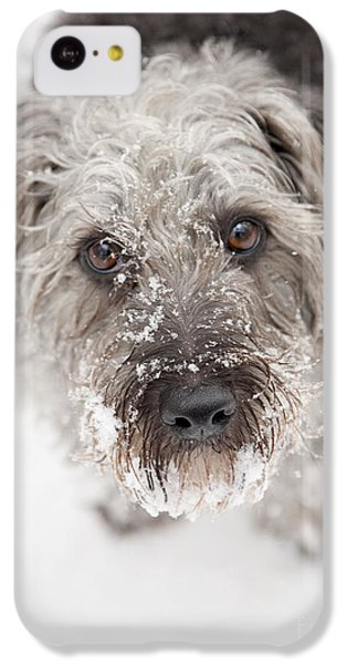 Snowy Faced Pup IPhone 5c Case by Natalie Kinnear