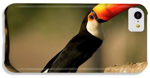 South America, Brazil, Pantanal, Mato IPhone 5c Case by Joe and Mary Ann Mcdonald