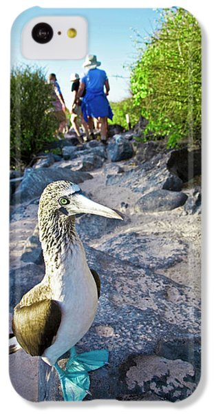 South America, Ecuador, Galapagos IPhone 5c Case by Miva Stock