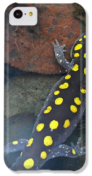 Spotted Salamander IPhone 5c Case by Christina Rollo