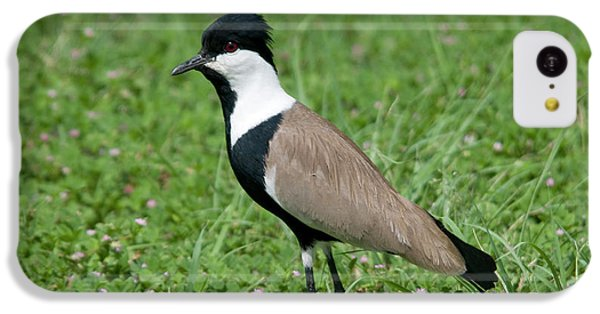 Spur-winged Plover IPhone 5c Case by Nigel Downer