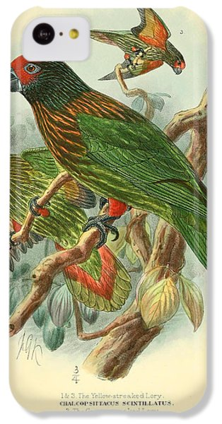 Streaked Lory IPhone 5c Case by J G Keulemans