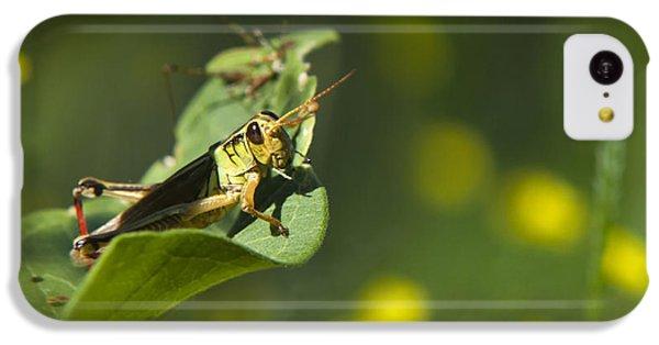 Sunny Green Grasshopper IPhone 5c Case by Christina Rollo