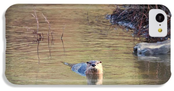 Sunrise Otter IPhone 5c Case by Mike Dawson