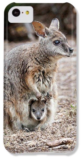 Tammar Wallaby (macropus Eugenii IPhone 5c Case by Martin Zwick