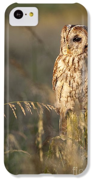Tawny Owl IPhone 5c Case by Tim Gainey