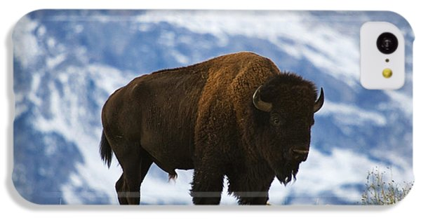 Teton Bison IPhone 5c Case by Mark Kiver