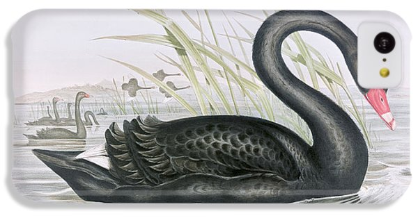 The Black Swan IPhone 5c Case by John Gould